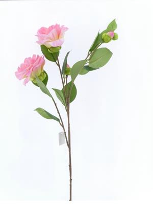 <h4>Af Camelia Pink</h4>