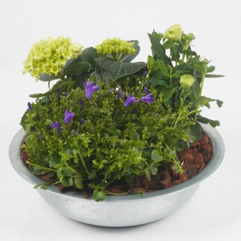 <h4>ALSM3 Arrangementen planten in schaal</h4>