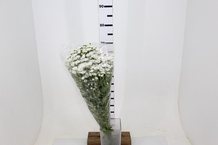 <h4>MADIBA LINDI WHITE 070 CM</h4>