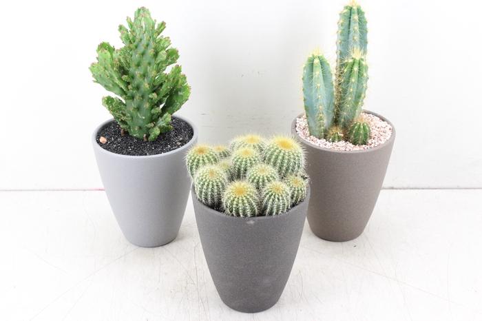 <h4>arr. UB - Ker. pot mix grijs cactus</h4>