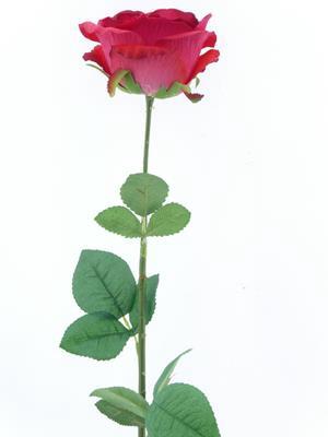 <h4>Af Rose Sco Scarlet Red</h4>