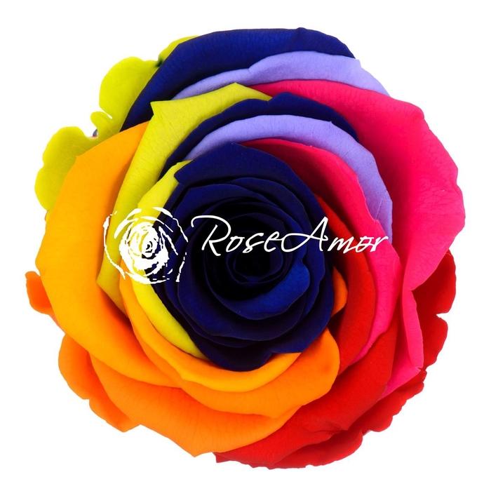 <h4>PRESERVED ROSA LL RAINBOW BLU 03</h4>