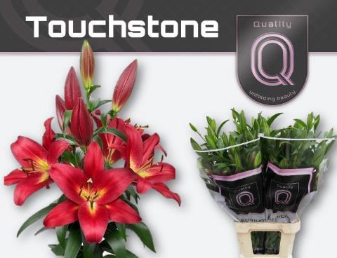 <h4>Lilium (OT-hybrids Grp) 'Touchstone'</h4>