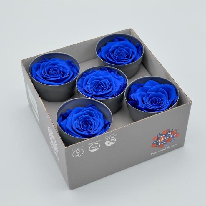 <h4>R PR Queen Dark Blue</h4>
