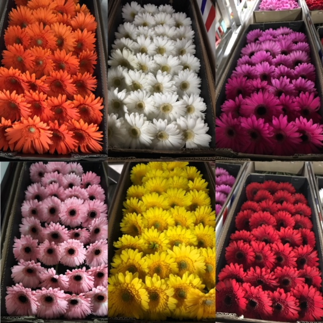<h4>Gerbera Mini Mix</h4>