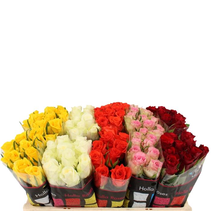 <h4>Rosa grootbloemig Holla Mix</h4>