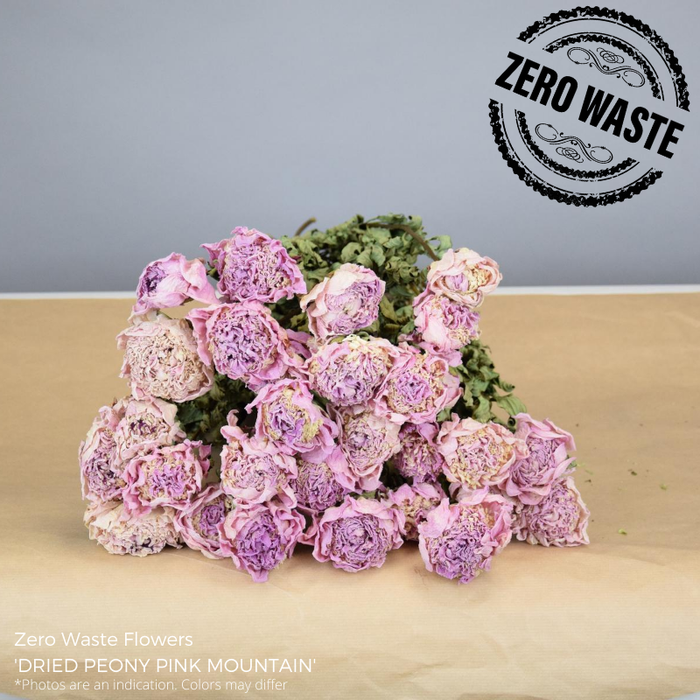 <h4>Dried Peony Pink Mountain</h4>