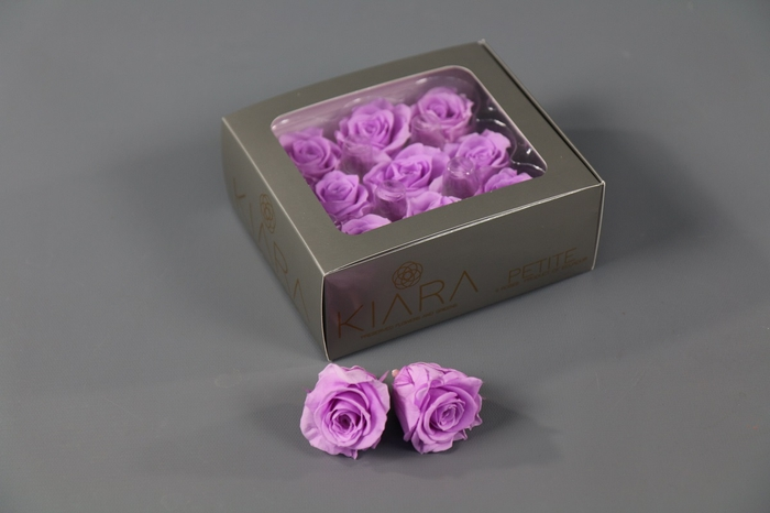 <h4>Rosa Preserved Baby Lily Petite</h4>