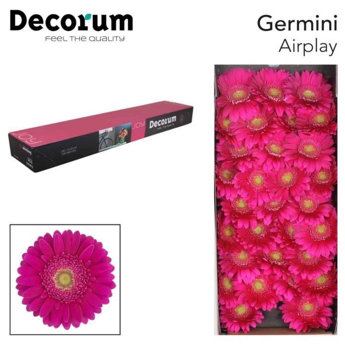 <h4>Germini Airplay</h4>