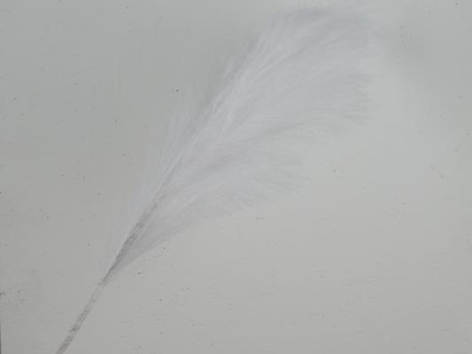 <h4>Af Pampas 100cm White</h4>