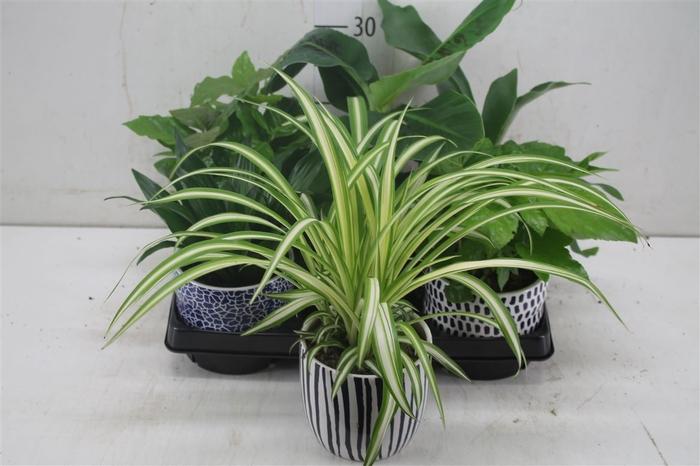 <h4>Plant Mix Keramiek</h4>