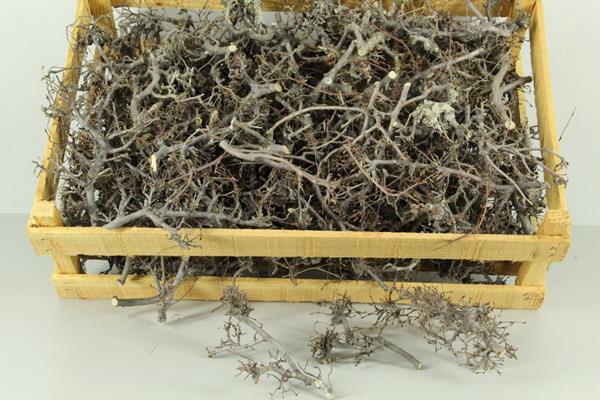 <h4>Bonsai Branch Natural Box</h4>