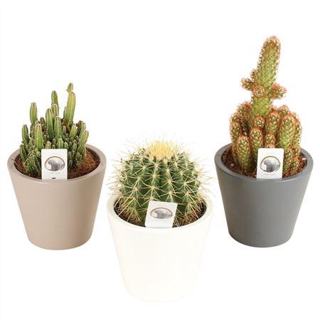 <h4>Cactus A41230191 Gemengd Keramiek Karla</h4>