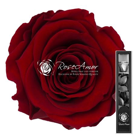 <h4>30cm Stem Red01</h4>