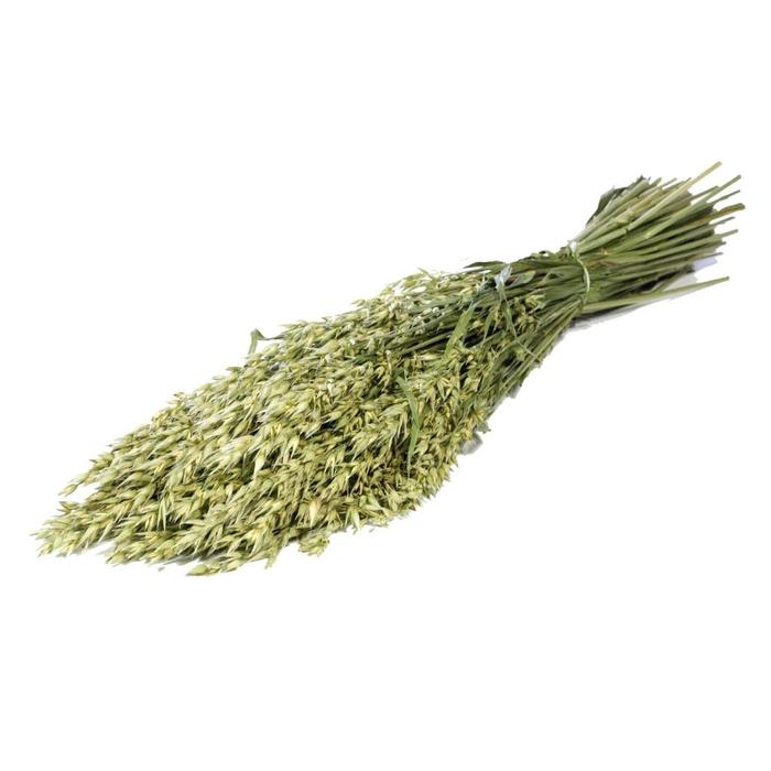<h4>Haver (avena) green natural</h4>