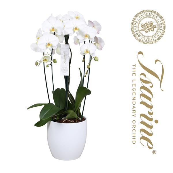 <h4>Tsarine® Nr25 Wit Crown</h4>
