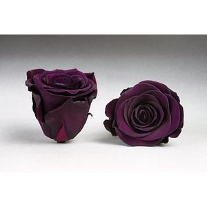 Rose stab. L Pur-01