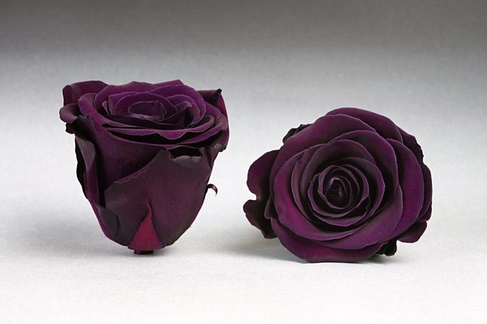 Rose stab. XL Pur-01