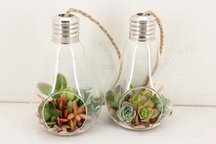 <h4>arr. WD D6 - Lamp XL</h4>