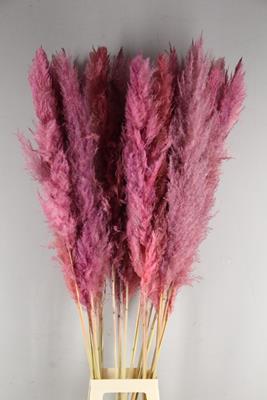 <h4>Df Pampas 140cm Old Pink</h4>