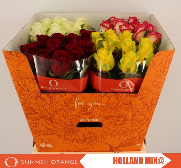 <h4>R GR HOLLAND MIX@ 10</h4>