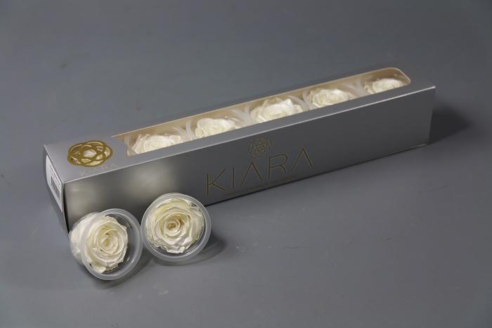 <h4>Rosa Preserved Pearl Gem</h4>