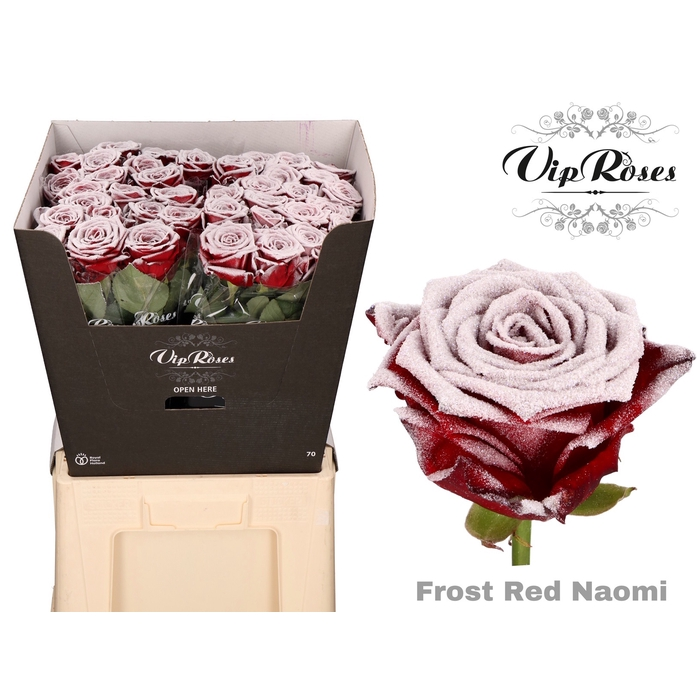 <h4>R GR FROST RED NAOMI</h4>