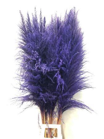 <h4>Corta Dried X X L Purple P St</h4>