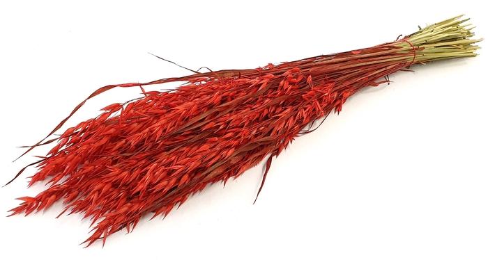 <h4>Avena per bunch red</h4>