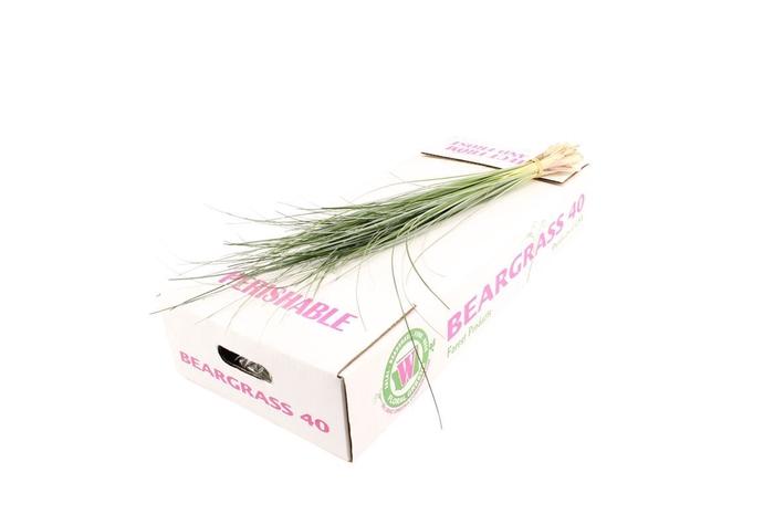 <h4>Beargrass</h4>