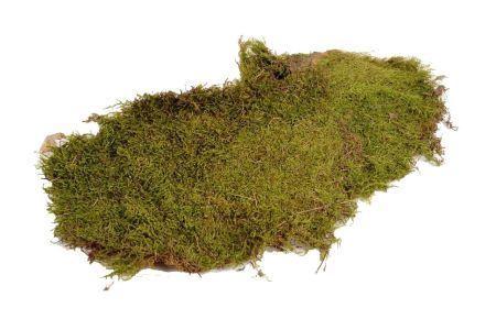<h4>Basic Flat Moss 2kg</h4>