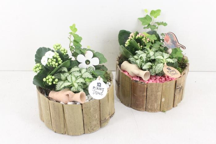 <h4>arr. PL - Bamboe rond - roze/wit</h4>