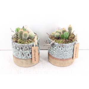 arr. MB Cactus - Ker. rond luxe