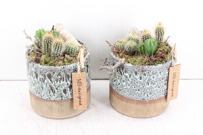 <h4>arr. MB Cactus - Ker. rond luxe</h4>