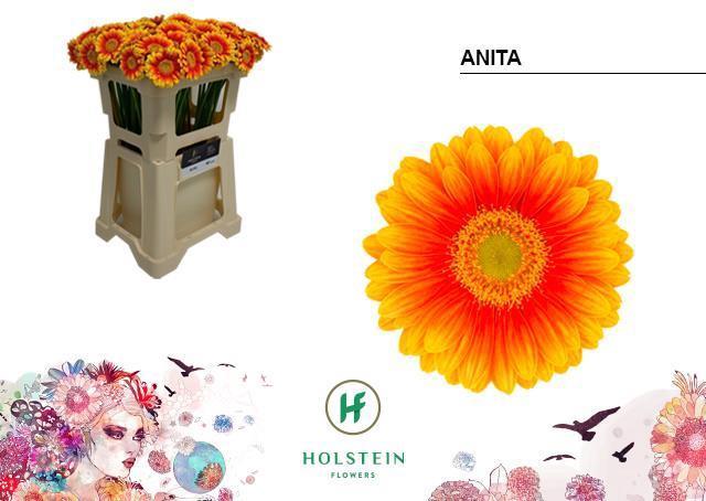 <h4>GE MI ANITA</h4>