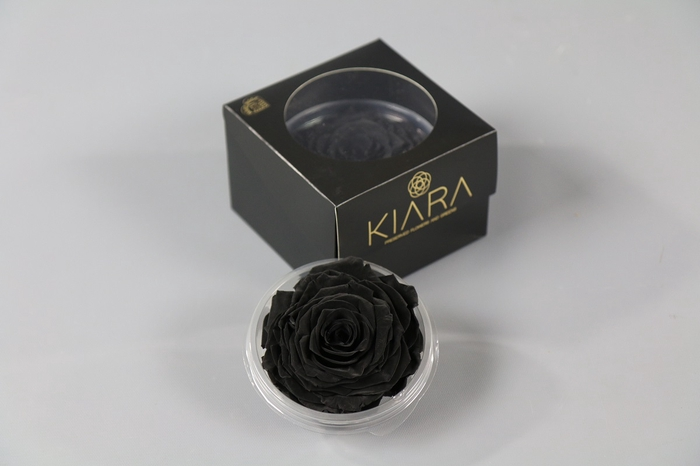 <h4>Rosa Preserved Black Beauty Solitarie</h4>