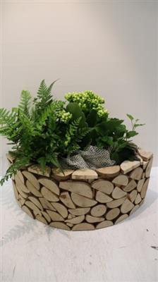 <h4>2748 Schijf KANO Plants</h4>