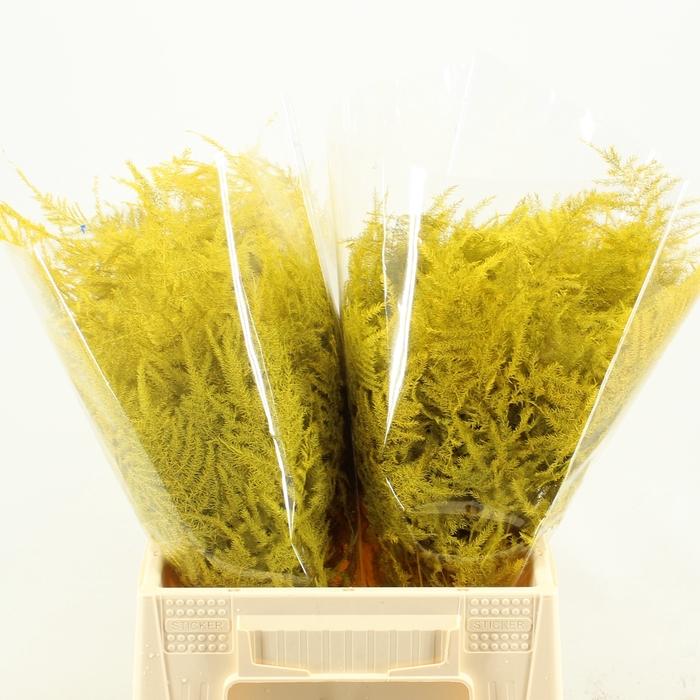 <h4>1e Veren Klb H% Yellow</h4>