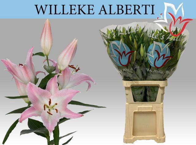 <h4>LI OR WILLEKE ALBERT</h4>