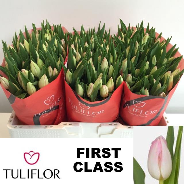 <h4>TU EN FIRST CLASS</h4>