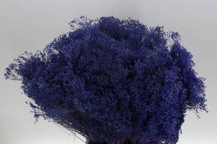 <h4>Broom Bloom Milka (P. Bos) geprepareerd</h4>