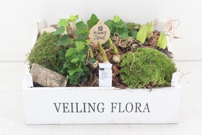 <h4>arr.. Bollenmix PL - Kist veiling flora</h4>