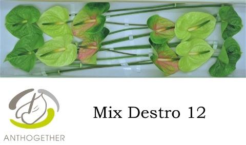 <h4>Anthurium andr.   ...mix</h4>