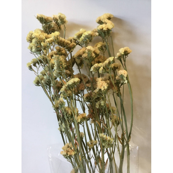 <h4>DRIED FLOWERS - STATICE APRICOT 5pcs</h4>