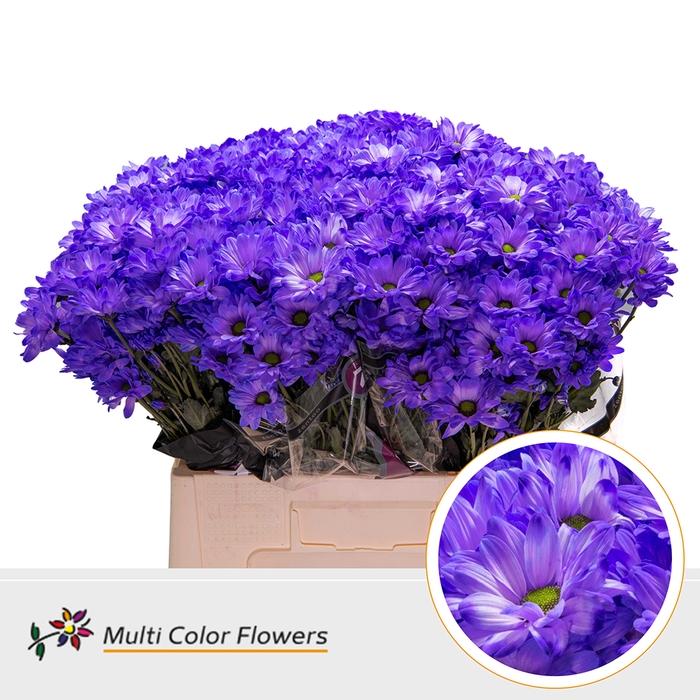 <h4>Chr. Bacardi  wit Violet Donker</h4>