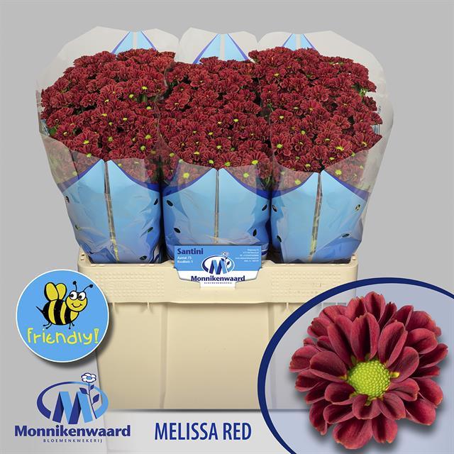 <h4>CHR SAN MELISSA RED</h4>