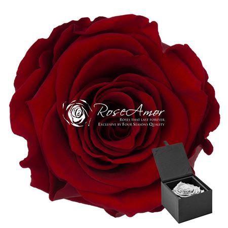 <h4>Pr 9.3 Giftbox Red-01 Xxl Gb2</h4>