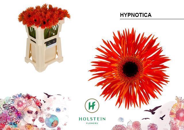 <h4>GE GS GERSP HYPNOTIC</h4>