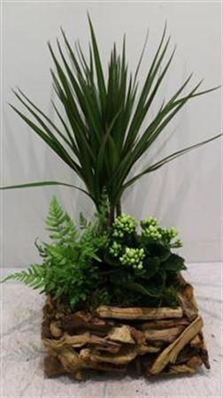 <h4>2956 Driftwood Vk Plants!!</h4>
