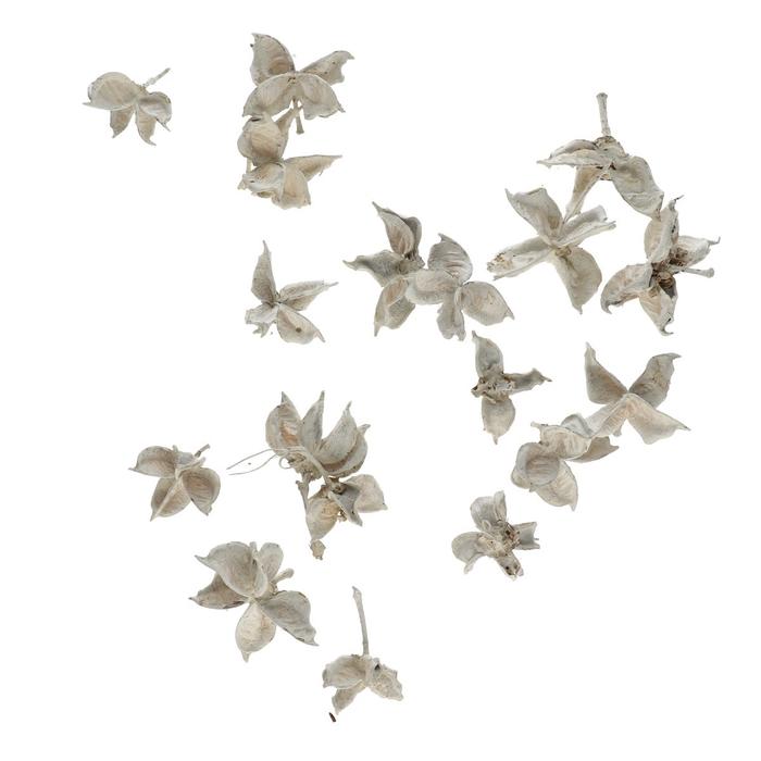 <h4>Dried articles Cotton pods 150g</h4>